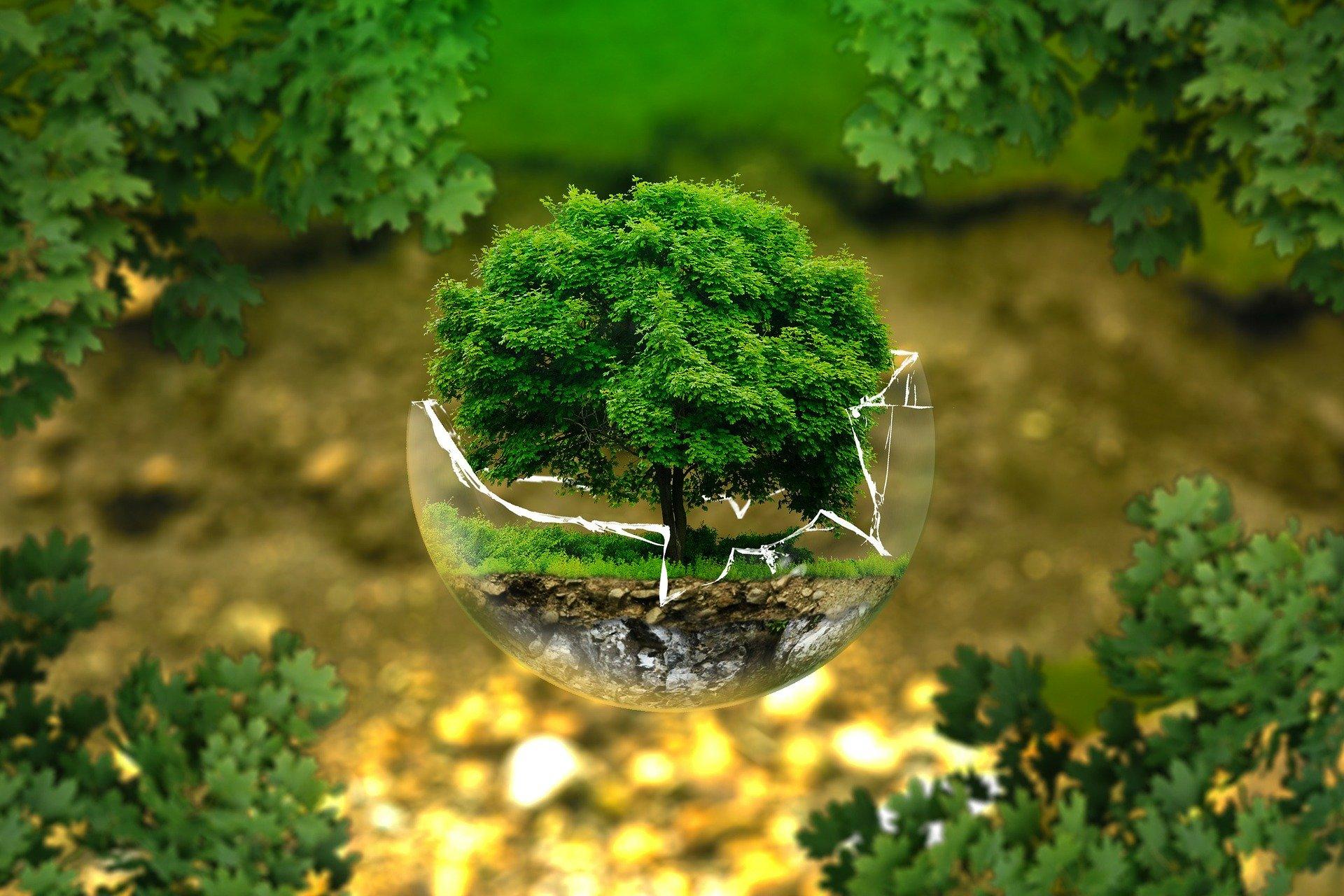 Projet environnemental ou social : Futur entrepreneur ?
